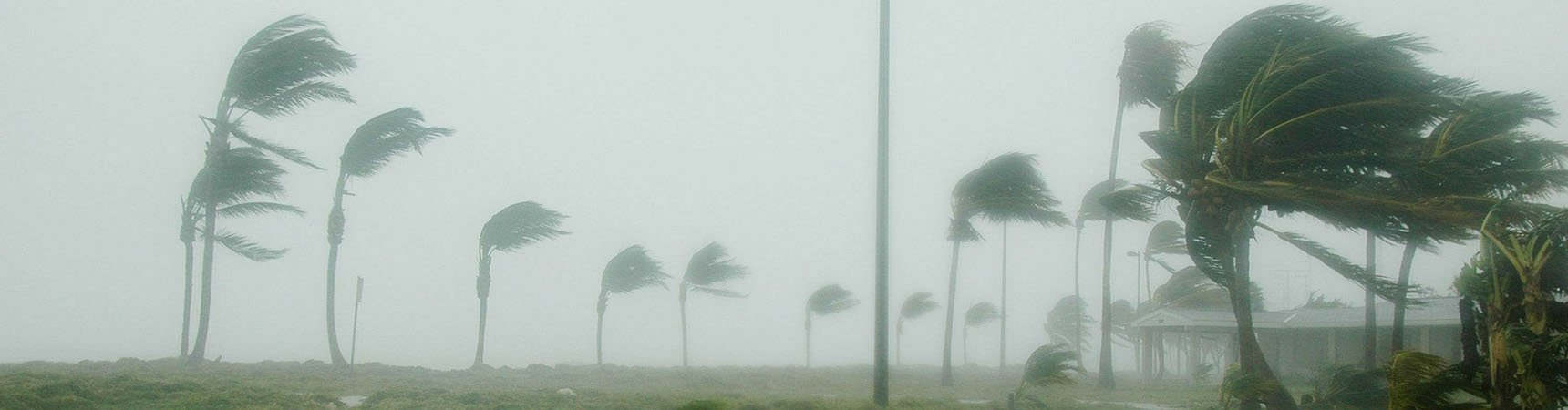 Palm Trees blowing from a hurricane